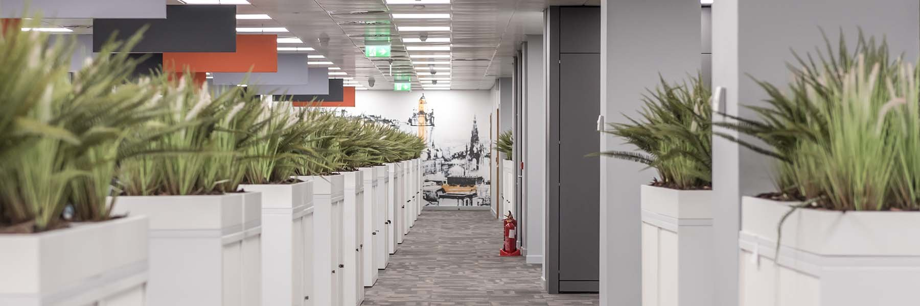 A modern office walkway created by white cabinet top planters with storage filled with live sansevieria plants