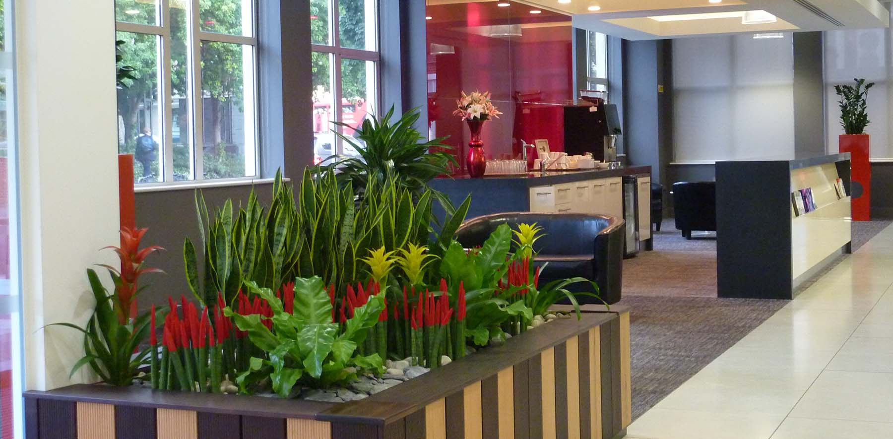 Colourful live planting welcomes visitors in London office. Built in planters include Guzmania and velvet-tipped Sansevieria