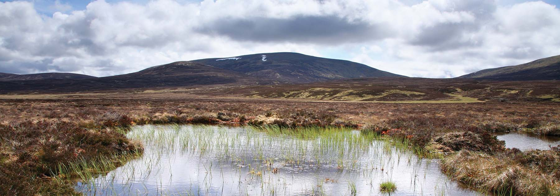Panoramic view of Scotland's peatlands. A scene of nature with undulating hills in the distance with marshland and grasses
