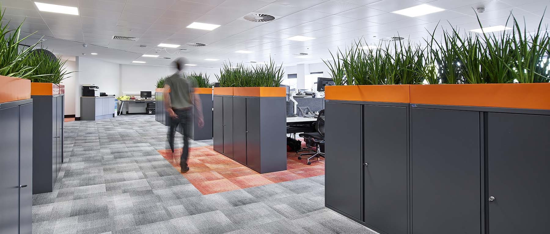 Bespoke coloured-matched cabinet top troughs mass-planted with live Sansevieria Kirkii Friends in a modern Edinburgh office
