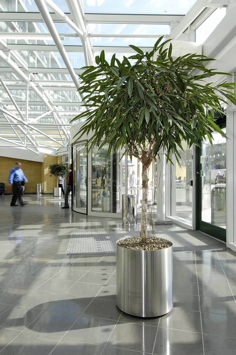 Large live Ficus trees and plenty of natural daylight – great examples of Biophilic Design in high-traffic spaces