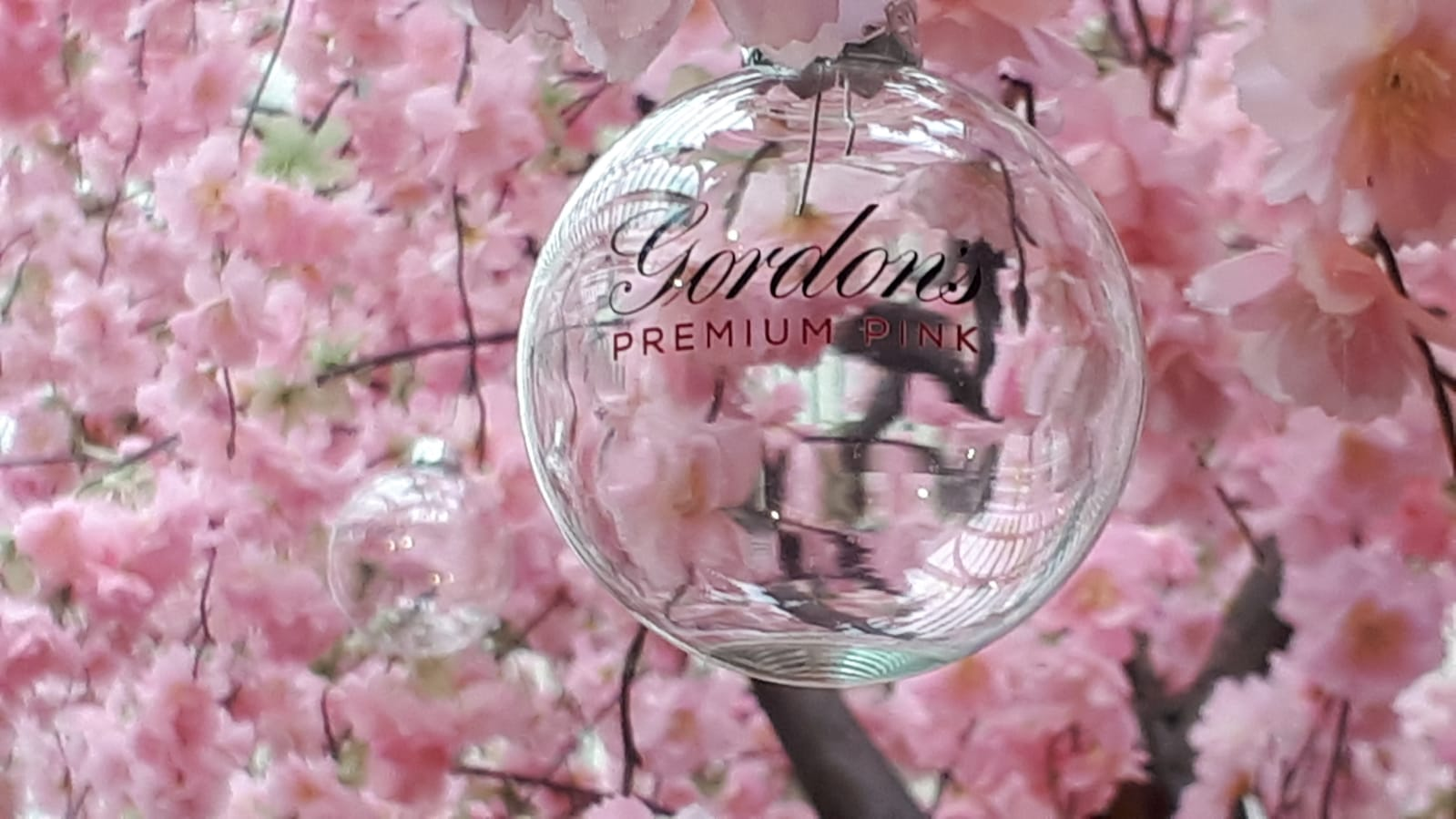 Bespoke clear glass bauble with Gordons Gin branding hanging from October Glasgow's cherry blossom tree