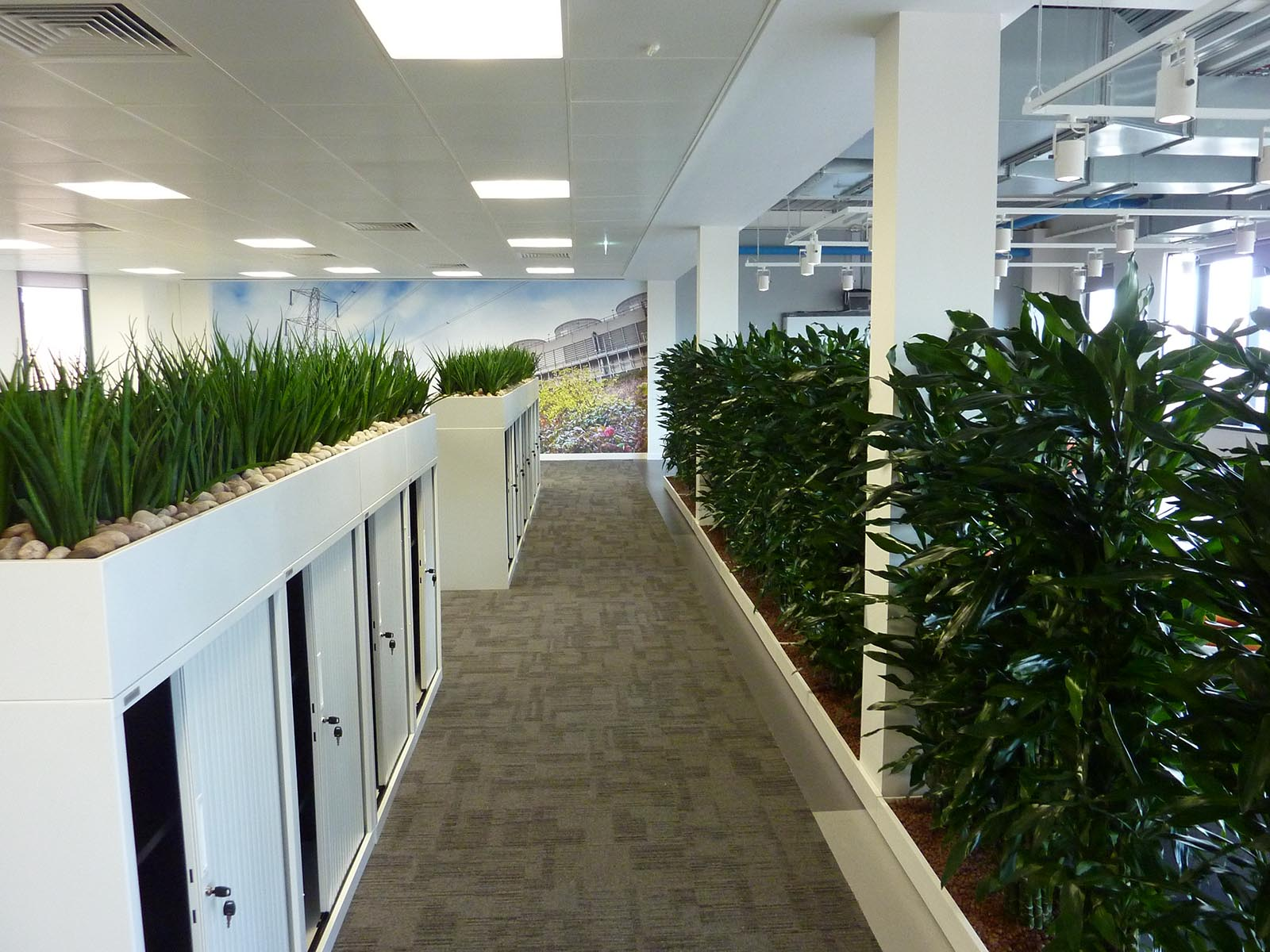 Modern open-plan office softened with cabinet top troughs of live Sansevierias and a screen of live Dracaena plants