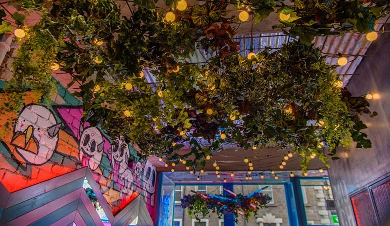 Dundee Mexican restaurant Muchacho, bright and eclectic with green ceiling of artificial ivy foliage and feature lights