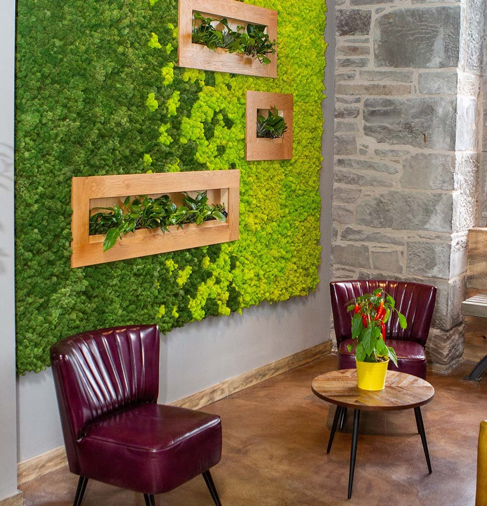 Two tone Nordik Moss wall with live plants in oak framed inset planters to create a cosy corner in café seating area