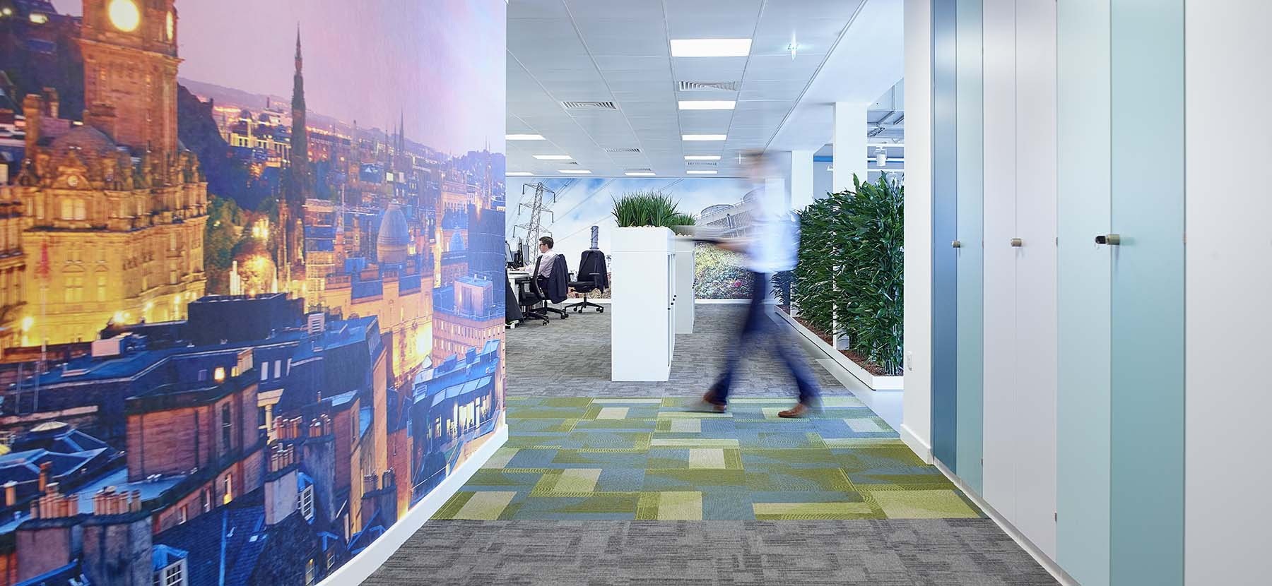 Modern Edinburgh office plants including cabinet top live displays and bespoke screen of real plants set into the floor