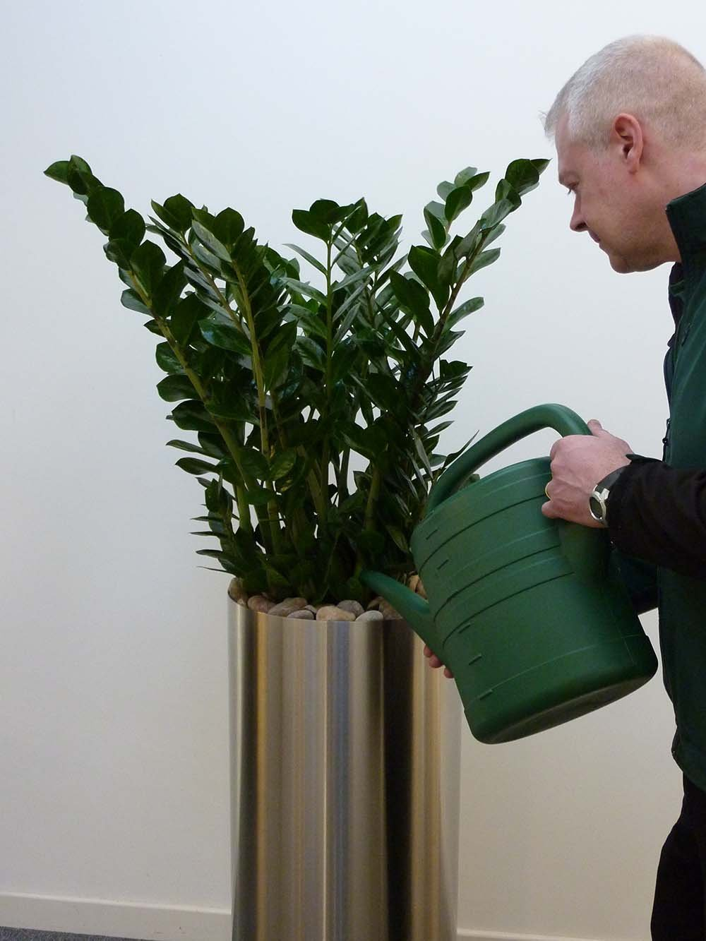 Benholm plant maintenance technician watering a live zamioculcas plant in a tall stainless steel planter