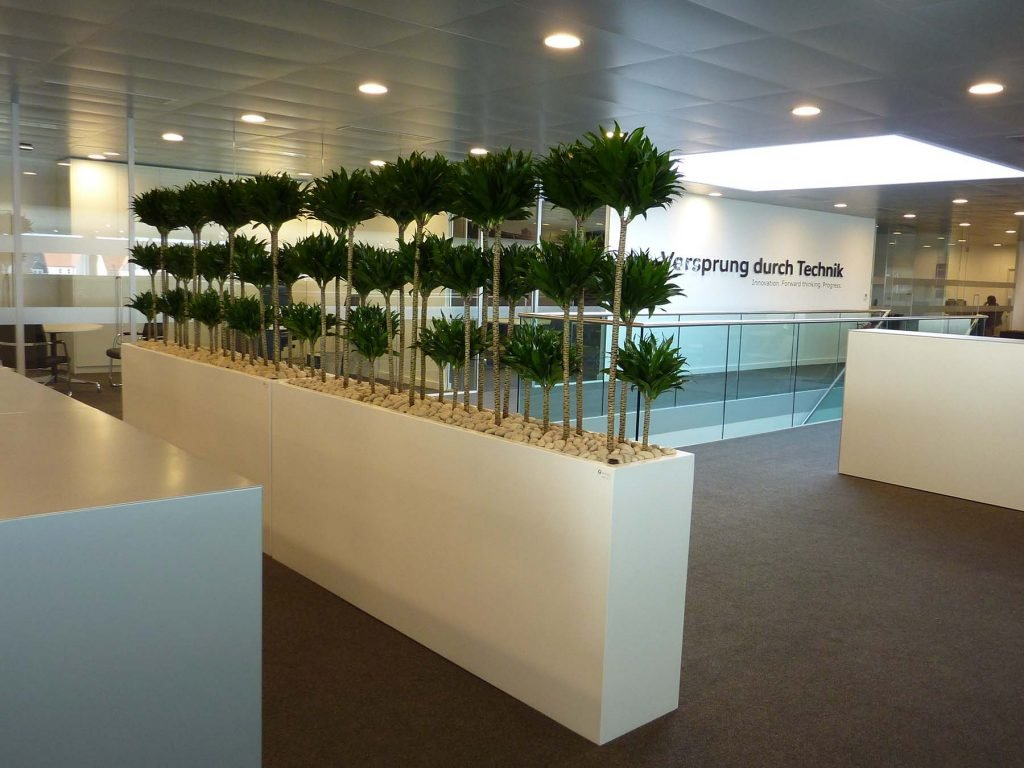 Planted screens with uniform Dracaena Compacta plants in white containers create biophilic divisions in Audi car showroom