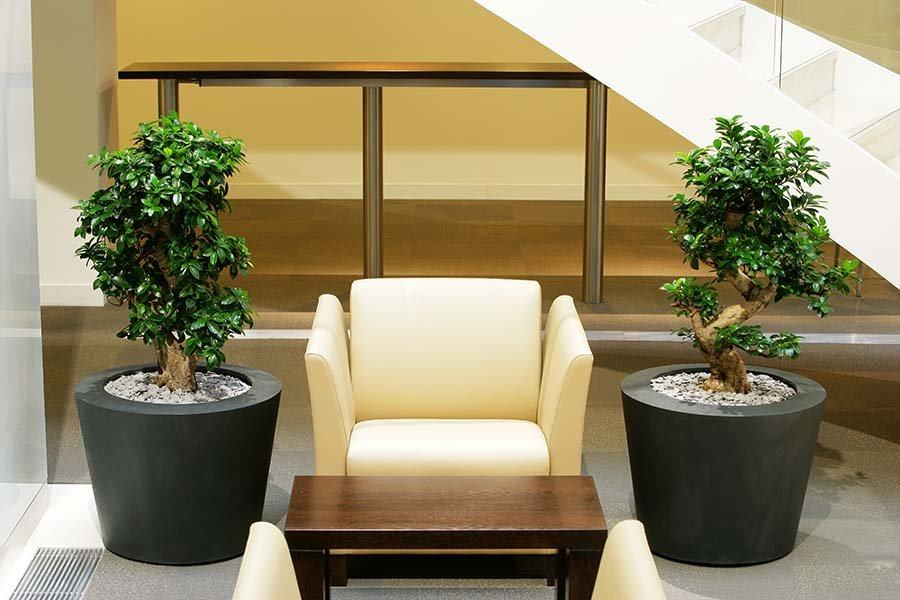 Natural live bonsai-style Ficus Microcarpa trees in lead-effect containers create a relaxing informal meeting space