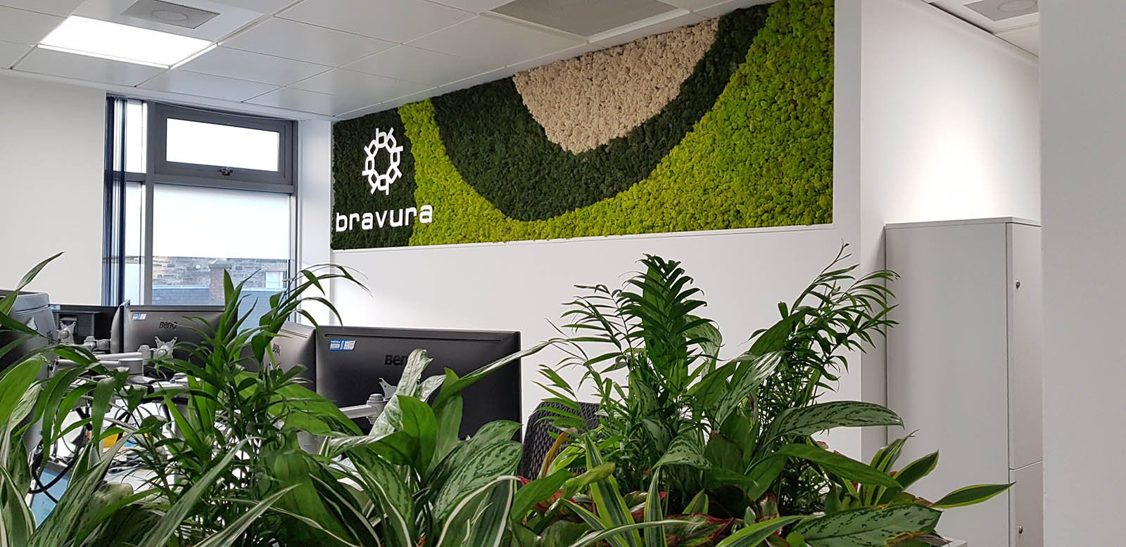 Bravura's office with a bespoke branded Nordik Moss wall panel and cabinet top planters with varied lush live plants