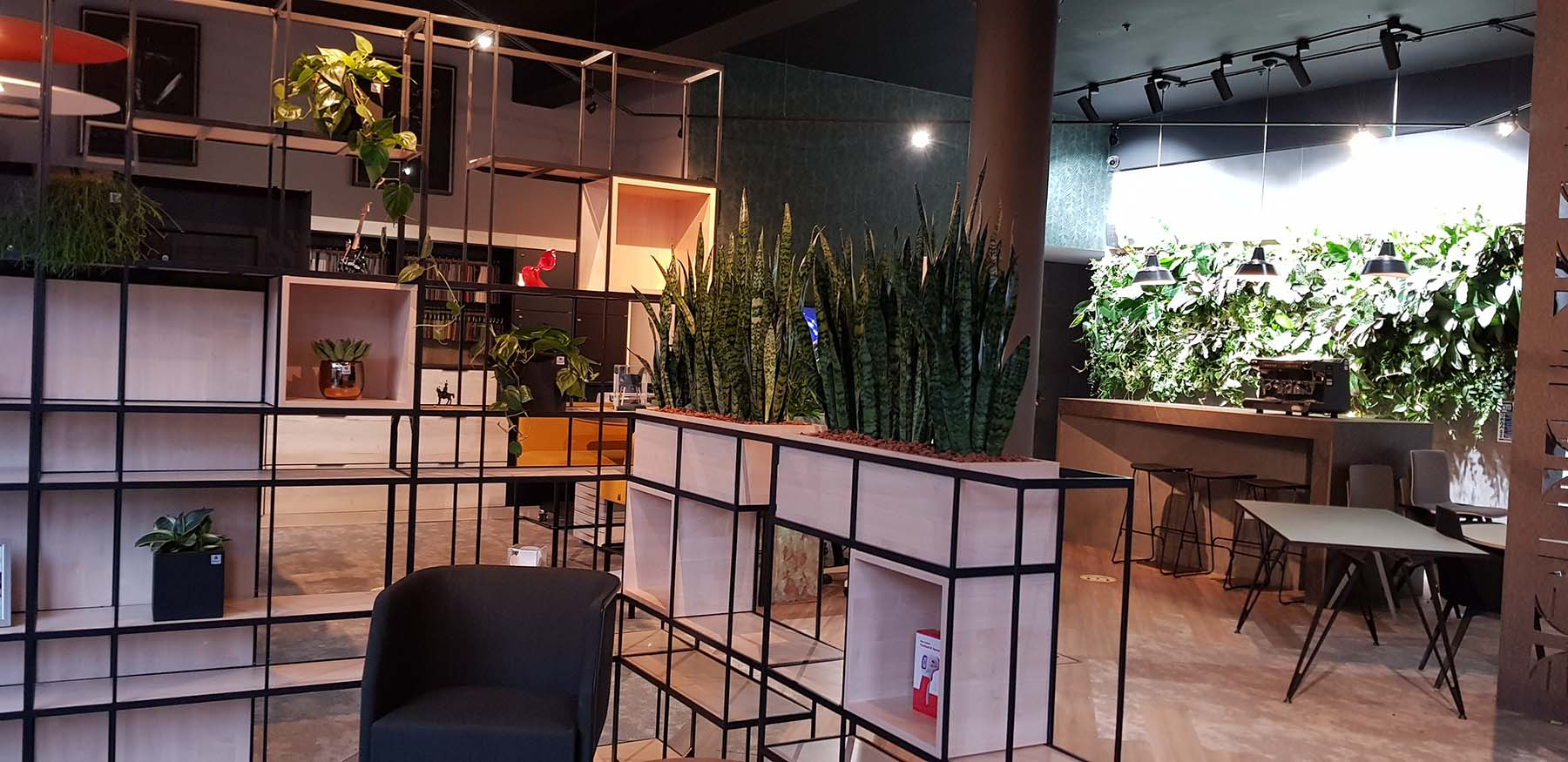 Modern office space with black grid shelving dressed with live plants including sansevieria. A lush living wall in the background