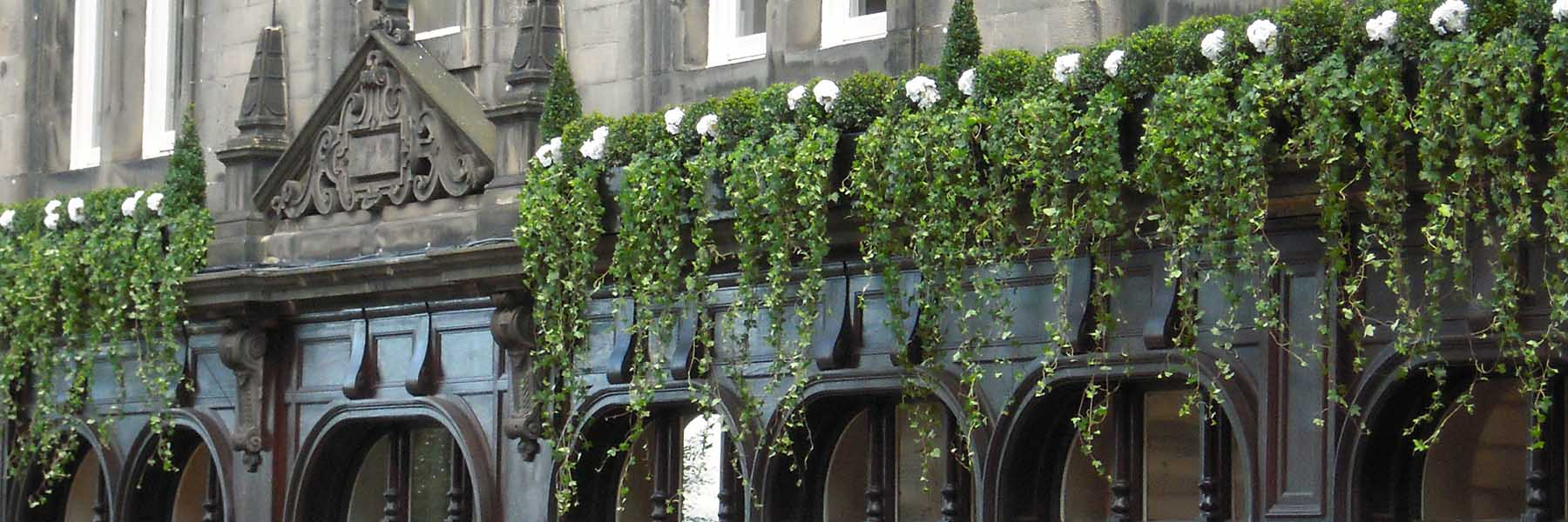 Fraser Suites Edinburgh decorated with high level live Buxus topiary and trailing ivies interspersed with white flowers, Outdoor Dining