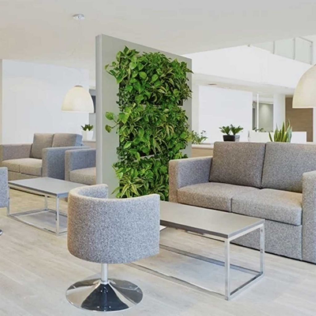 Single living wall panel filled with plant species on divide and separate open plan space in a modern office