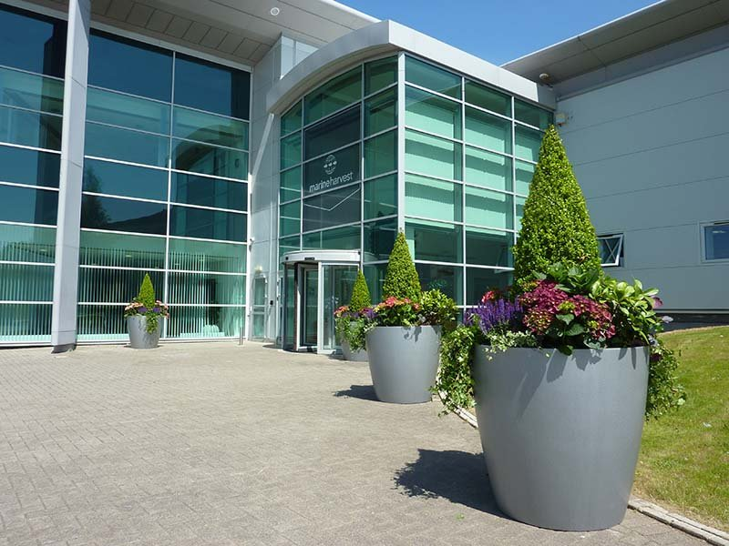 Large silver planters filled with colourful plants leading up to the entrance of a modern head office building